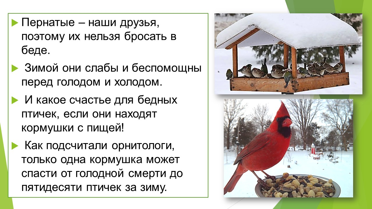 Акция «День птиц»