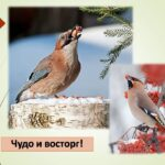 Акция «Покорми птиц»