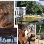 Нашему зоопарку 48 лет!