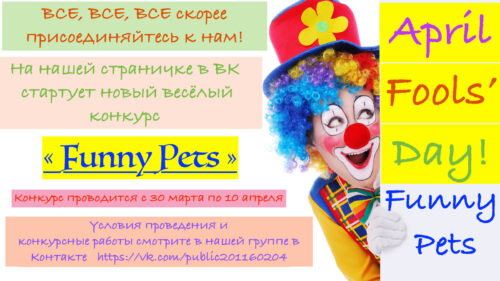 "САМЫЙ ВЕСЁЛЫЙ КОНКУРС ГОДА ""FUNNY PETS"""